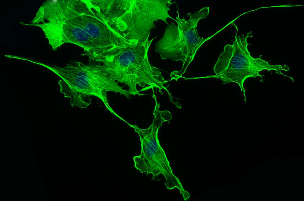 Llega la hora de los biohackers