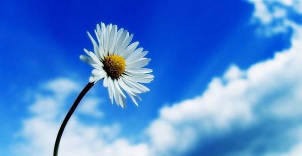 Flower-TB-modif