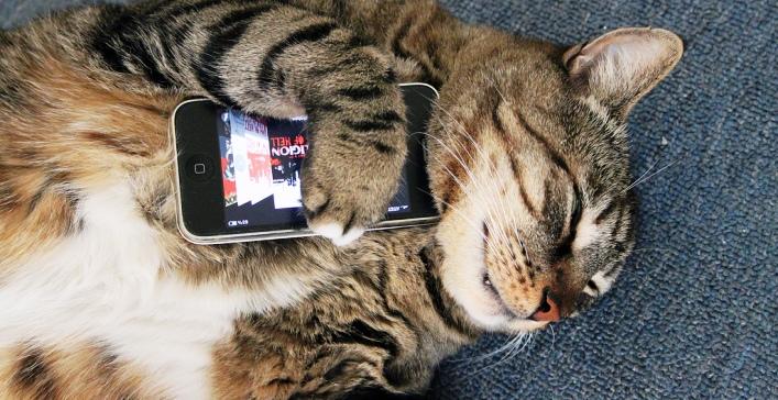 Los dispositivos del futuro nos permitirán comunicarnos con los animales