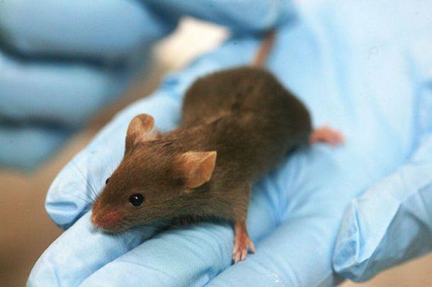 Mice lab