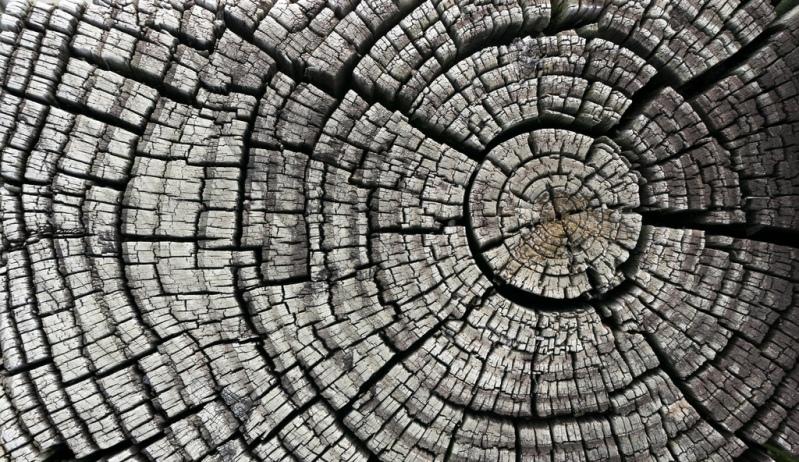 Crean nanobatería ecológica hecha con madera