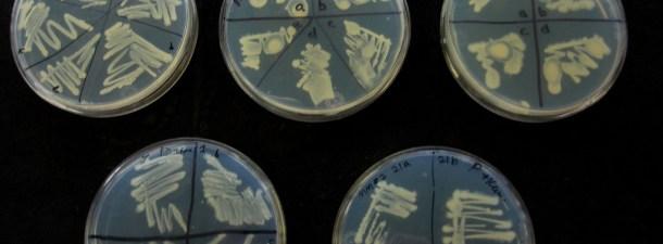 Bioplásticos, la nueva invención tecnológica más respetuosa con el medio ambiente