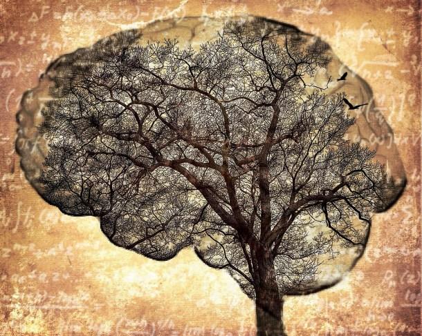 Escaneo cerebral