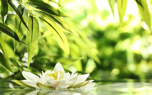 Imagen de un jardín zen