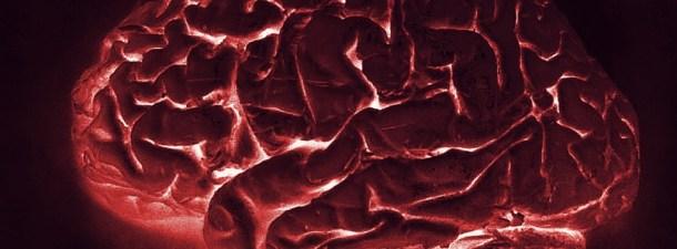 """Una """"navaja suiza molecular"""" podría acelerar los estudios del cerebro"""