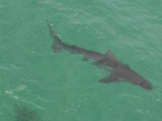 alertas de tiburones en twitter