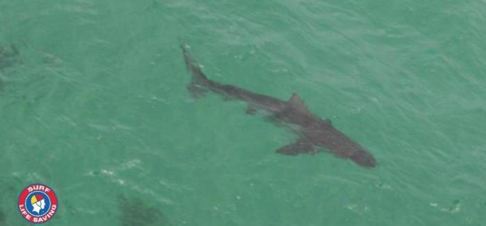 Cuando los tiburones alertan de su presencia en Twitter