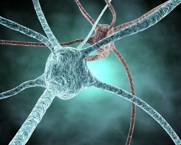 por qué olvidamos - neurogénesis