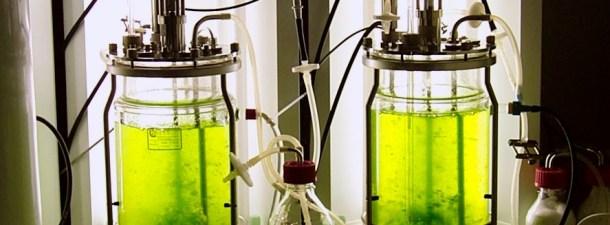 InvestBio, la aplicación móvil para promover proyectos emprendedores en biotecnología