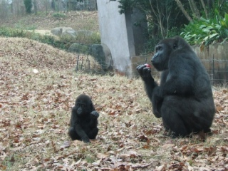 experimento con monos