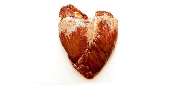 Un corazón con tejido cardíaco artificial late en animales