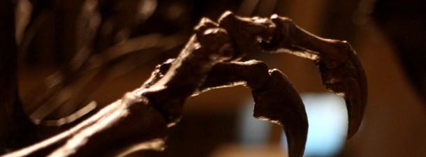 Reconstruyen digitalmente las huellas de dinosaurios encontradas en 1940