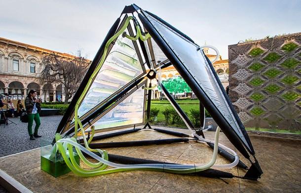 Urban Algae Canopy