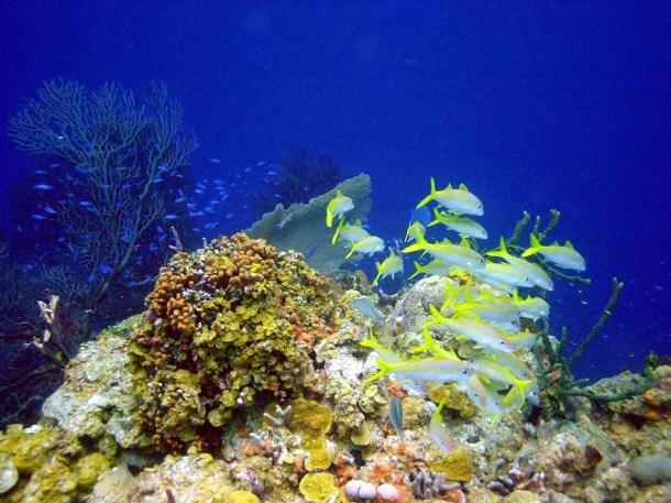 biotecnología marina