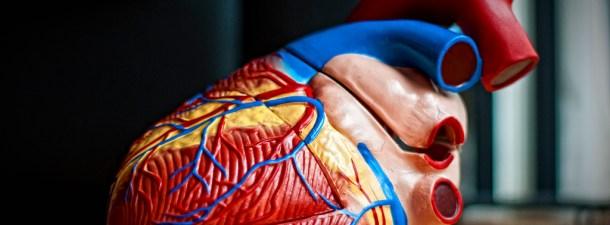 Válvulas para el corazón fabricadas en laboratorio salvan la vida de 10 niños