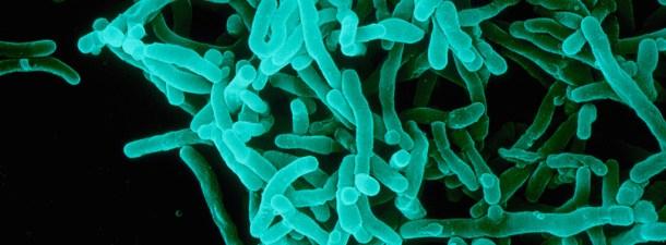 """Los microbios quizás se conviertan en los """"medicamentos del futuro"""""""