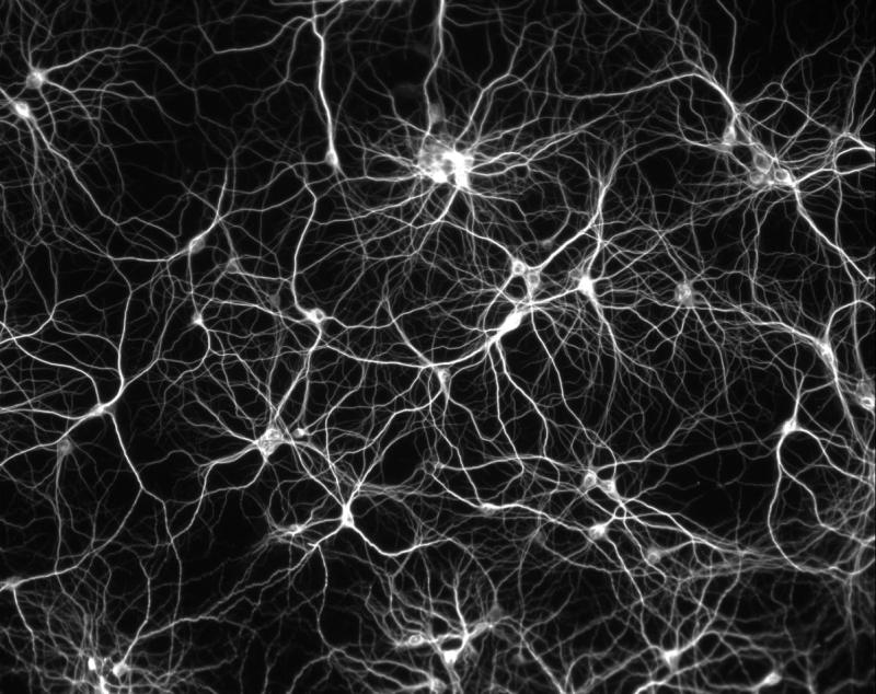 Science myths III: can adults generate new neurons?
