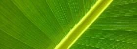 Fotosíntesis artificial: imitar a las plantas para producir energía limpia