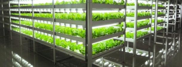 Japón abre una planta donde las lechugas crecen con luces LED