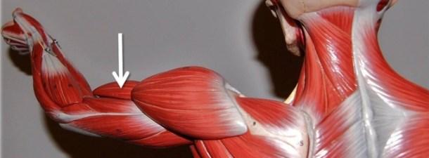 El papel de la impresión 3D en la formación de nuevos médicos
