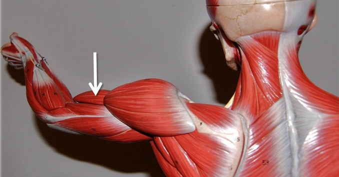 kit de anatomía impreso en 3D