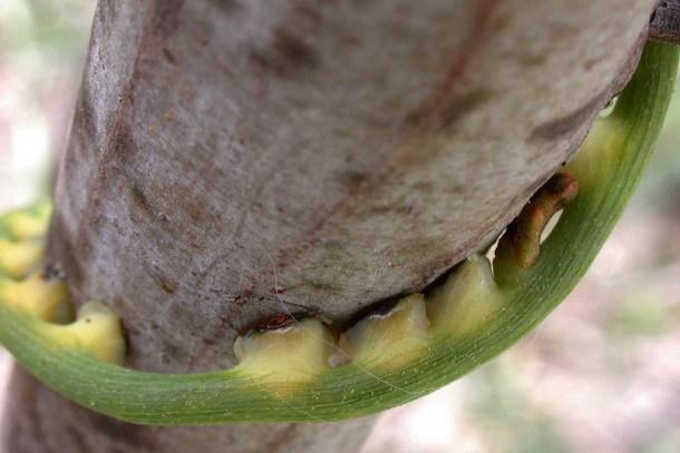 comunicación entre especies de plantas