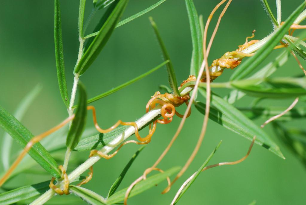Descubren un tipo de comunicación entre especies de plantas