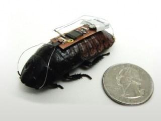 cucarachas cyborg