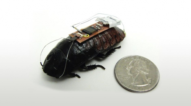 "Entrenan cucarachas ""cyborg"" para labores de rescate"