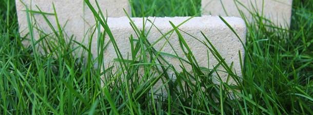 Este drone biodegradable se autodestruye al contactar con el suelo
