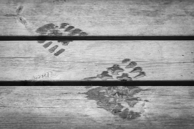 Zapatos con GPS, la innovación al servicio de las personas invidentes