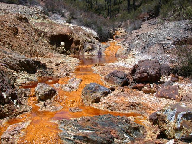 Algas que limpian aguas contaminadas por la minería
