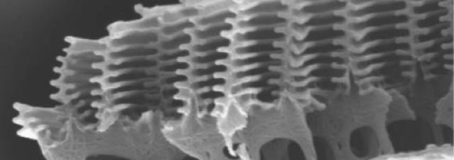 Tecnología inspirada en la naturaleza, sensores basados en alas de mariposas