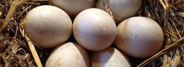 Saber cómo deshervir un huevo podría abaratar la lucha contra el cáncer