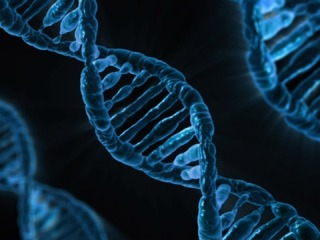 epigenoma
