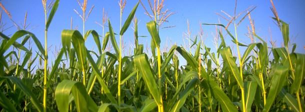 La biomasa ayuda a reducir las emisiones de dióxido de carbono