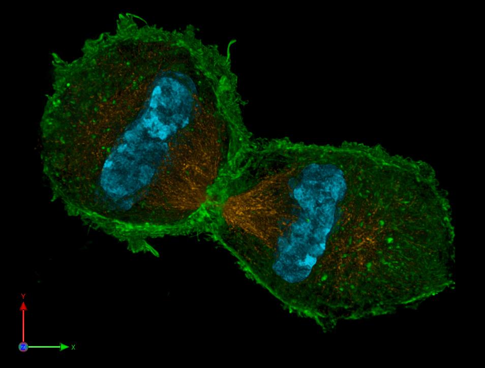 Programar células vivas, el próximo reto de la tecnología