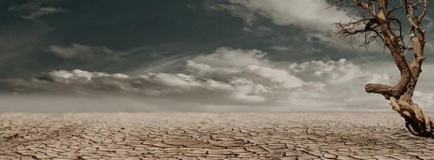 ¿Cultivos resistentes a la sequía? Un gen de la cebada podría ser la solución