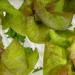 """¿Está el """"Internet of Food"""" transformando la agricultura tradicional?"""