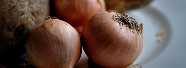 Logran crear músculo artificial a partir de… ¡cebollas!