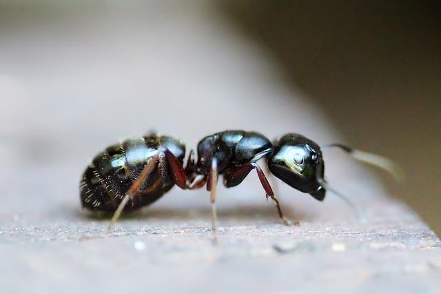 Esto es lo que nos pueden enseñar las hormigas para diseñar robots