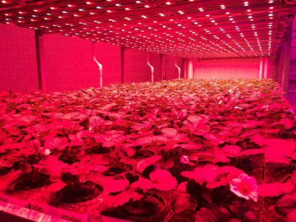 agricultura sin luz solar
