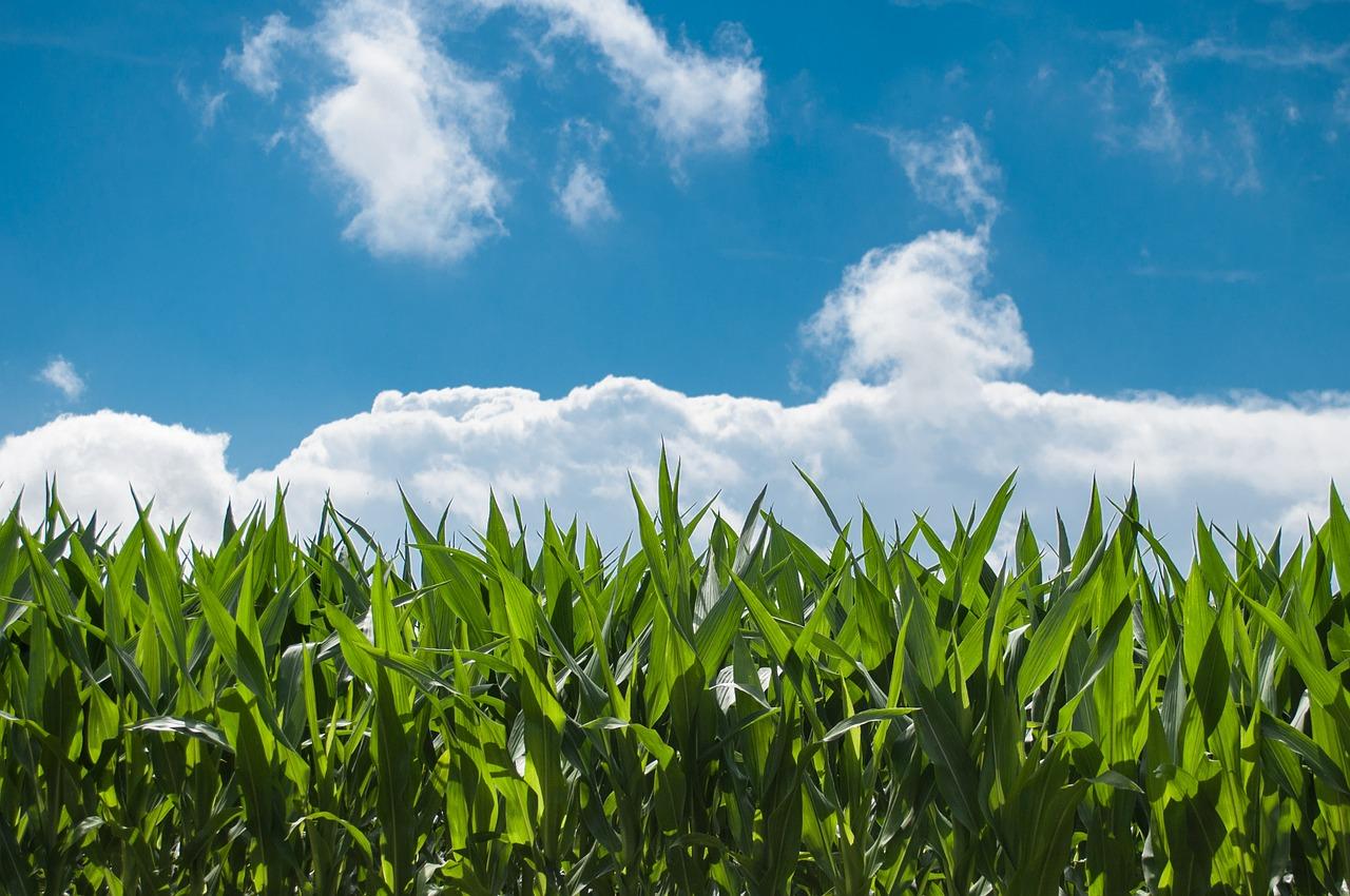 Big Data para la agricultura