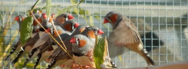 El Internet de las Cosas en el mundo animal para la protección de la biodiversidad