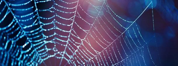 Veneno de arañas para combatir el dolor
