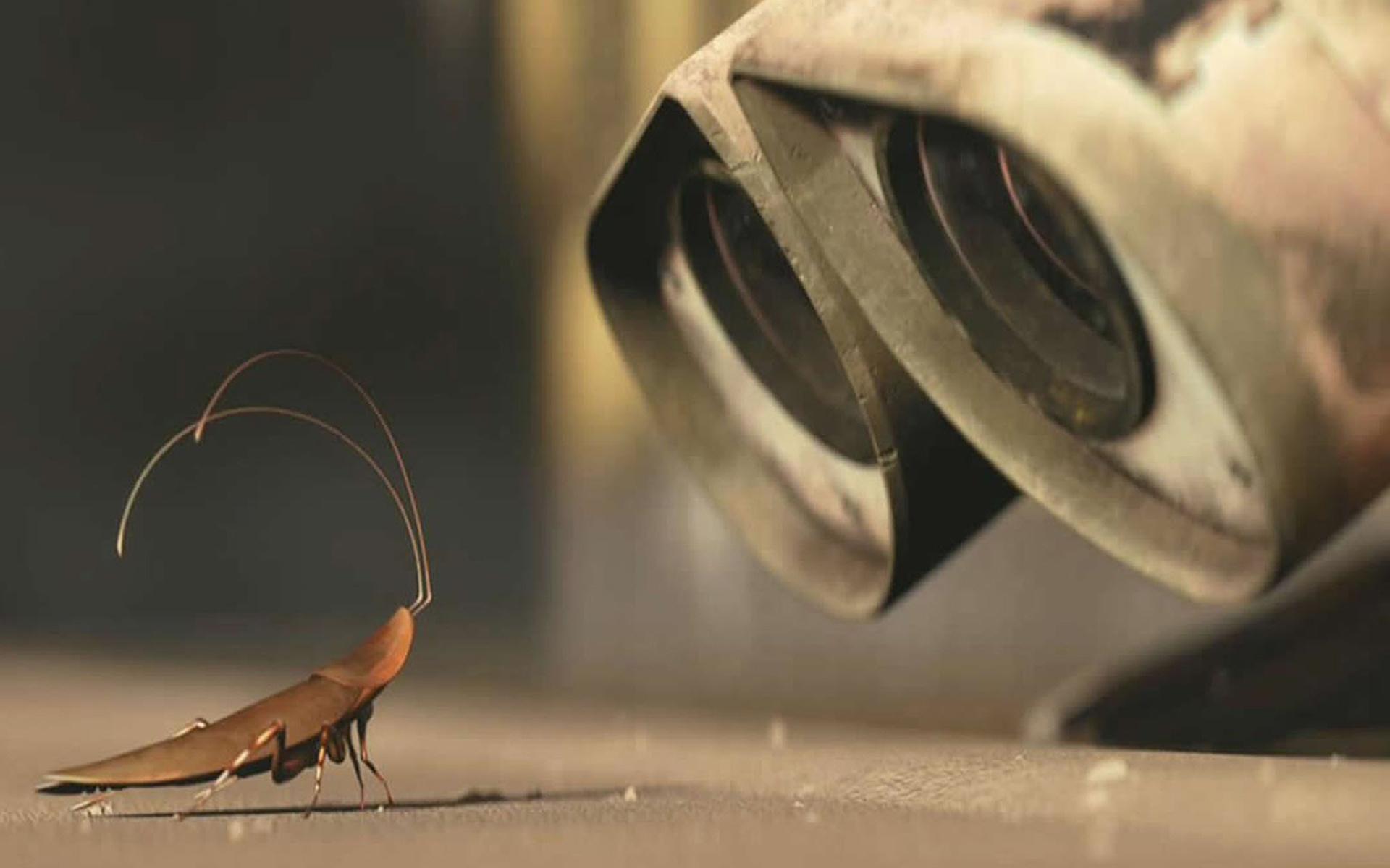 Los insectos, una inspiración para diseñar robots