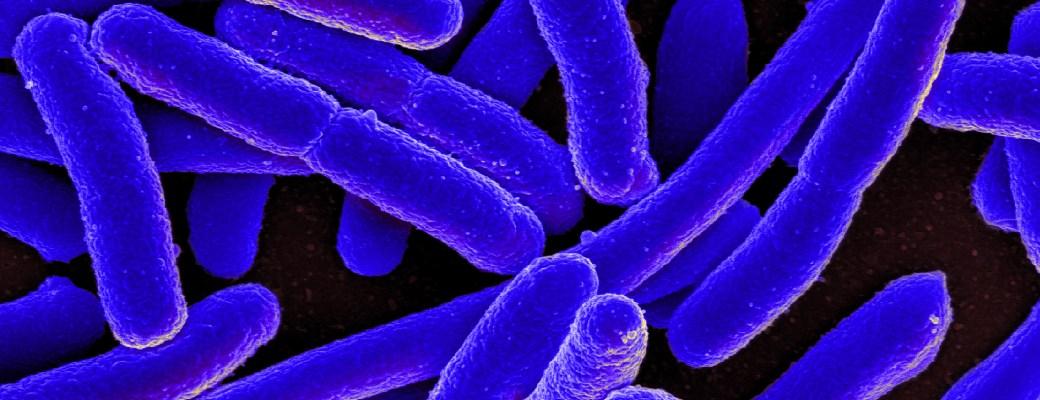 biología sintética
