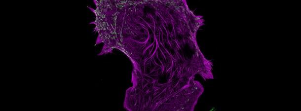 Logran ver el interior de las células con una resolución jamás lograda