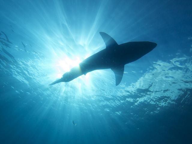 Estudio y seguimiento de pájaros y tiburones: aplicaciones para hacerlo