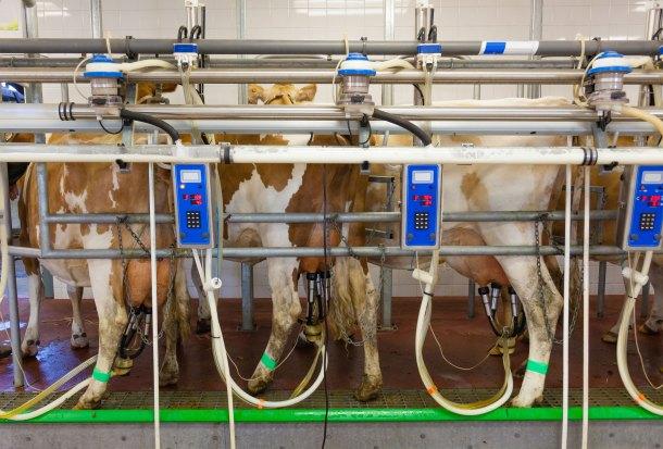 Ordeñar-vacas